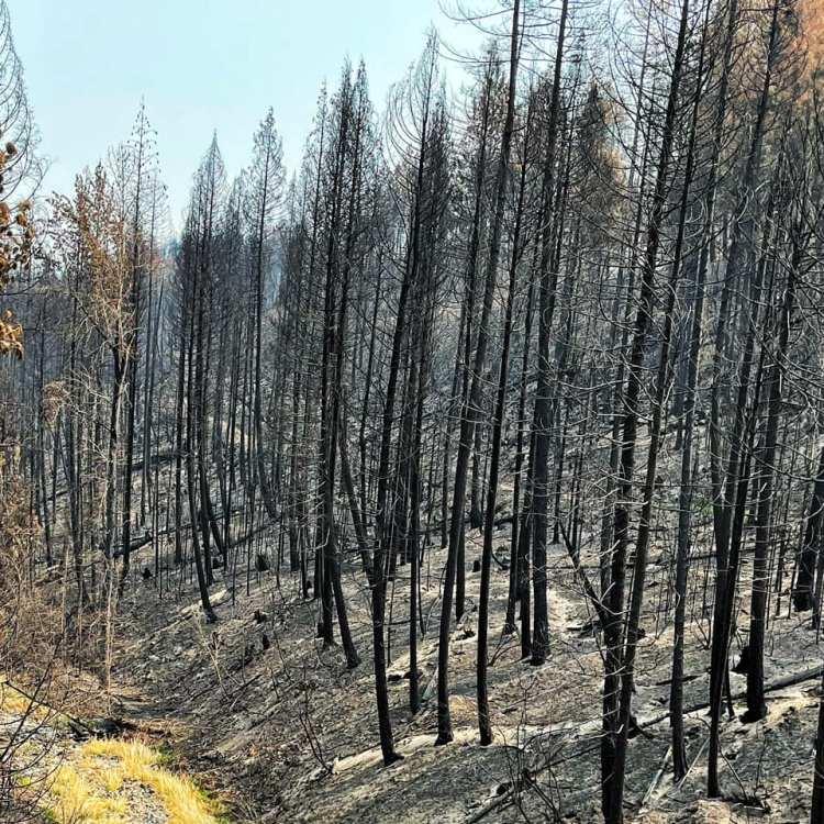 burned-Idaho-forest