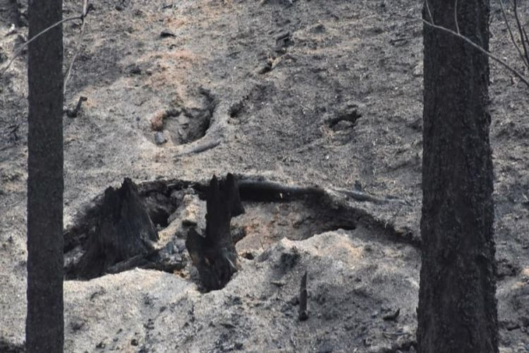 burned-out-stump-after-forest-fire